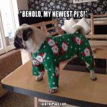 Pug Pajamas - Lynn English and Vera