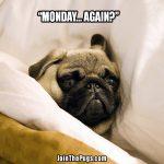 Pug - monday again