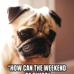 Pug - weekend over