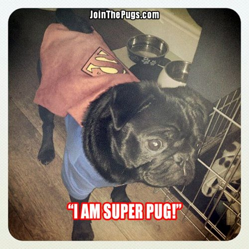 Super Pug - Join The Pugs