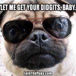 Pug's Got Game