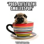 cup pup pug