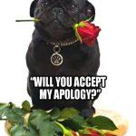 pug-apology