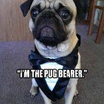 pug bearer - Ashley Bledsoe