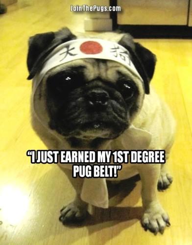 pug black belter