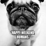 pug happy weekend