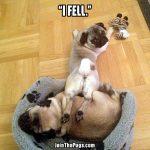 puglet fell