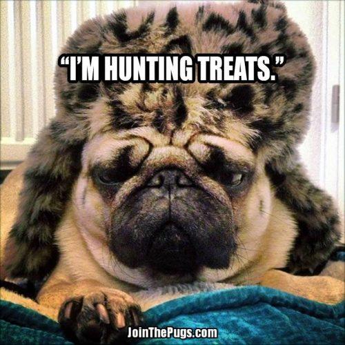 treat hunter