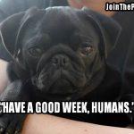 Good Week Ahead - Join the Pugs