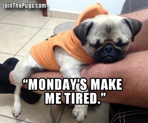 Monday Blues - Join the Pugs
