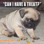 Colette Perras - (Can I have a treat)