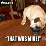 That was mine - Join the Pugs