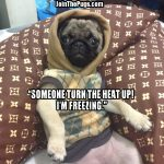 Turn up the heat! - Join the Pugs