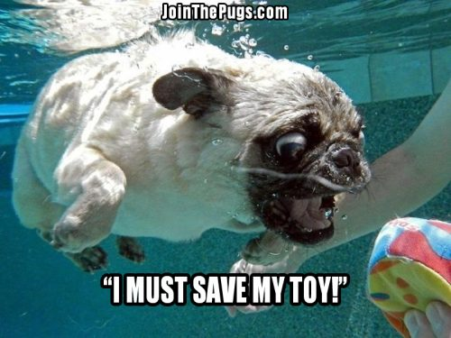 Dive Pug - Join the Pugs