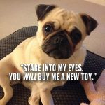 You will buy me a new toy - Join the Pugs