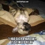 It's time to relax - Join the Pugs
