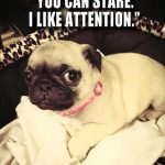 I like attention - Join the Pugs