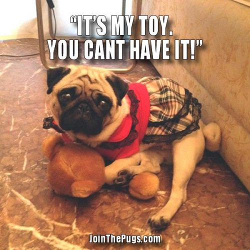 It's my toy - Join the Pugs