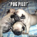 Pug Pile - Join the Pugs