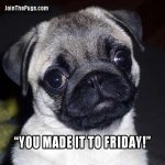 You made it to Friday - Join the Pugs