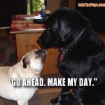 Make my day - Join the Pugs