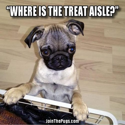 Where is the treat aisle - Join the Pugs