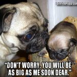 You'll be as big as me soon - Join the Pugs