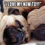 I love my new toy - Join the Pugs