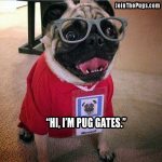 Smart Pug - Join the Pugs