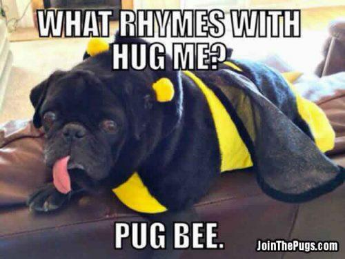 Pug Bee - Join the Pugs
