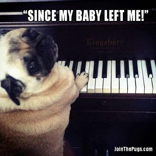 Since my baby left me - Join the Pugs