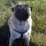 Wishful Thinking - Join the Pugs