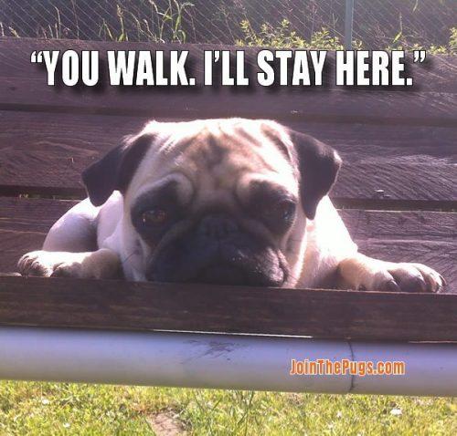 Pug Walks - Join the Pugs