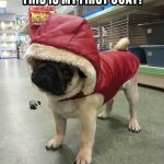What do you think of my new coat - Join the Pugs