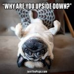 Upside Down Pug - Join the Pugs
