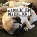 Weekend Pugs - Join the Pugs