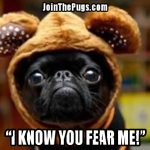 funny black puglet - Join the Pugs