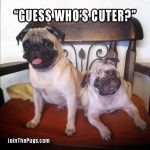 Guess who's cuter - Join the Pugs