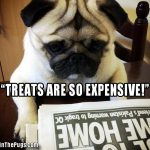 Treats are so expensive - Join the Pugs