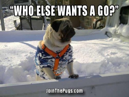Snow Pug - Join the Pugs