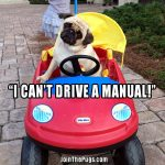I can't drive a manual - Join the Pugs
