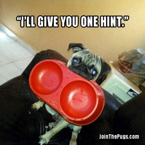 I'll give you one hint  - Join the Pugs