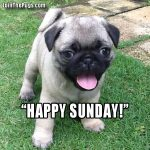 Happy, Sunday - Join the Pugs