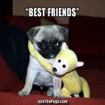 Best Friends - Join the Pugs