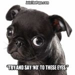 The Eyes Have Spoken - Join the Pugs