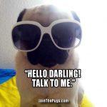Little Diva Pug - Join the Pugs