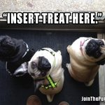 Insert Treats Here - Join the Pugs