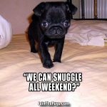 Weekend Snuggles, Anyone? - Join the Pugs
