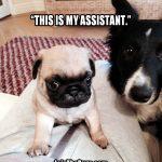 Meet the Boss & his Sidekick - Join the Pugs