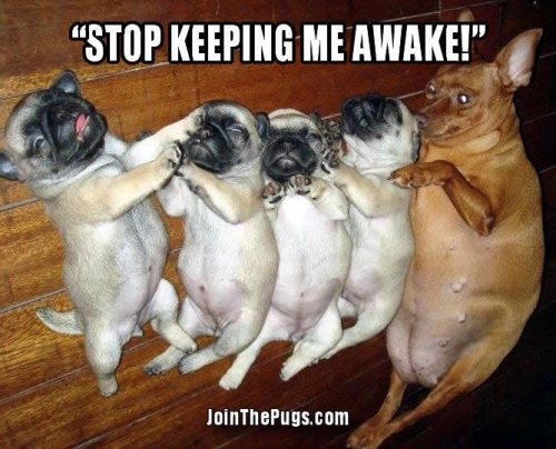 Stop keeping me awake - Join the Pugs